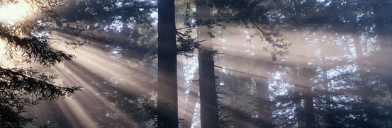 Light shining behind two trees in forest